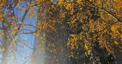 ІПМаш ім. А. М. Підгорного НАН України оголошує конкурс на заміщення вакантної посади старшого наукового співробітника відділу загальнотехнічних досліджень в енергетиці за спеціальністю 144 – теплоенергетика на умовах строкового договору (контракту)